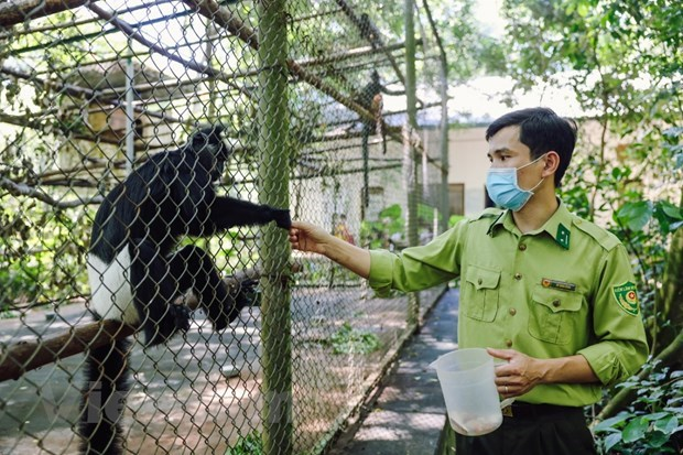 Wildlife release tour raises public awareness of nature conservation hinh anh 2