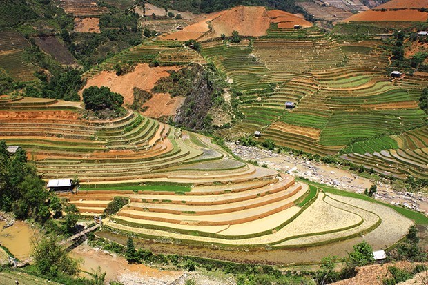 Mu Cang Chai in rice-growing season: A mural to the Northwest hinh anh 2