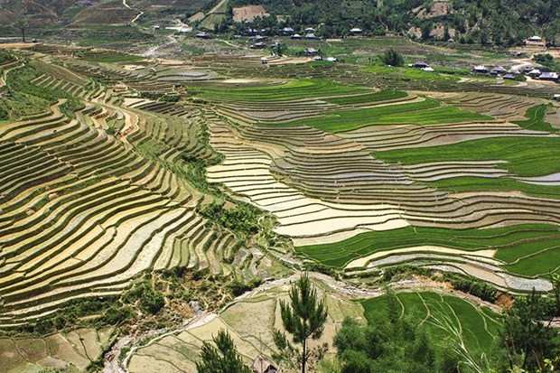 Mu Cang Chai in rice-growing season: A mural to the Northwest hinh anh 1