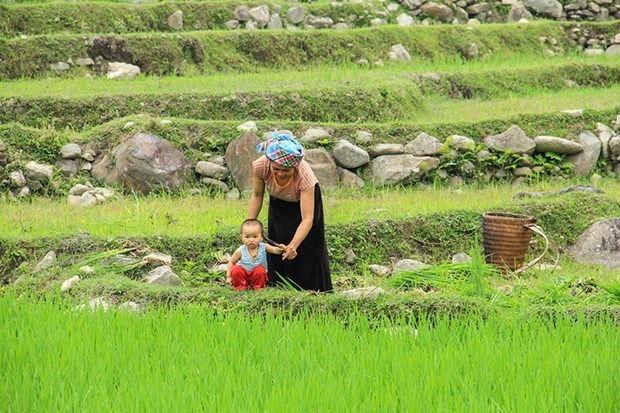 Mu Cang Chai in rice-growing season: A mural to the Northwest hinh anh 3
