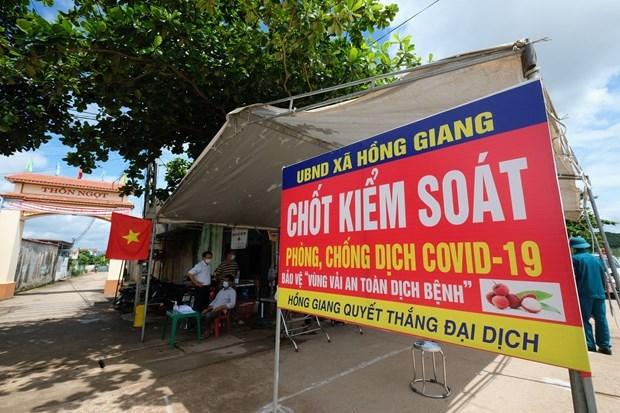 Success story of Bac Giang lychee hinh anh 3