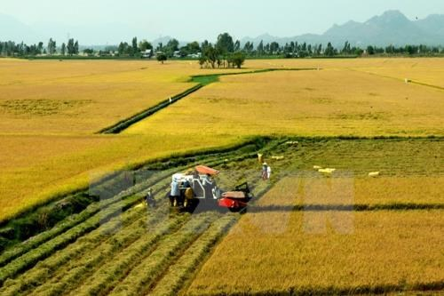 Tra Vinh to switch to other crops on 7,400ha of low-yield rice fields hinh anh 1