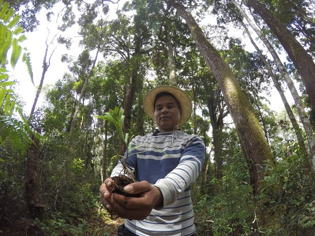 Community-based forest management the way forward hinh anh 3