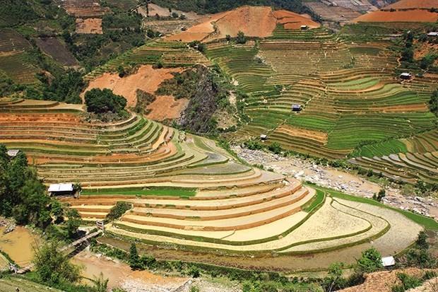 Festival highlights Mu Cang Chai terraced fields' beauty hinh anh 1