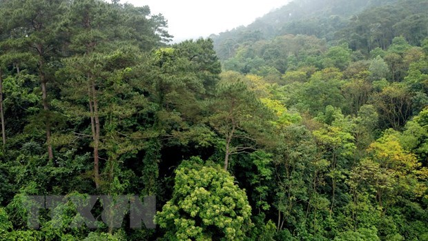 Tam Dao National Park – a perfect retreat for nature lovers hinh anh 2