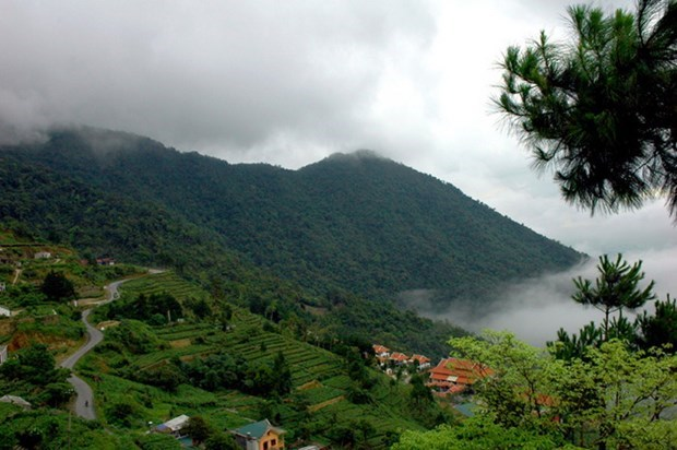 Tam Dao National Park – a perfect retreat for nature lovers hinh anh 1