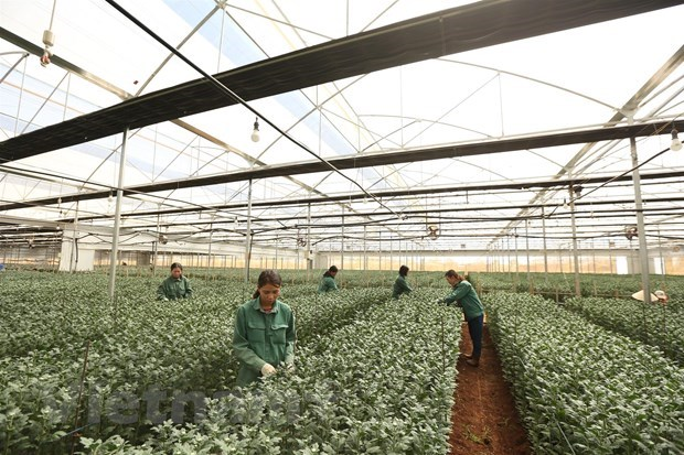 Vietnamese firms need support to get immunity against COVID-19 hinh anh 2