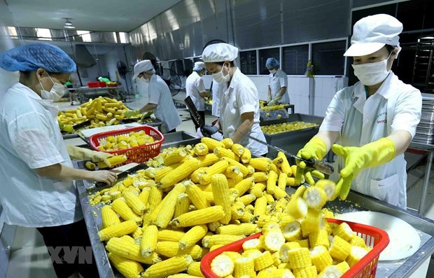 RCEP helps Vietnamese agricultural products reach out to the world hinh anh 1