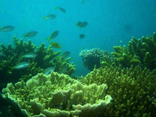 200ha of bleached Con Dao corals recover naturally hinh anh 1
