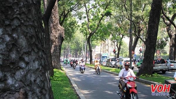 HCM City needs regular tree surveys hinh anh 1