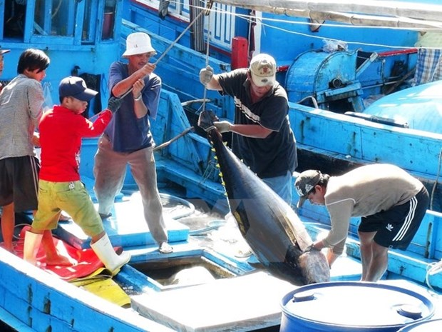 Tuna exports to EU soar in October hinh anh 1