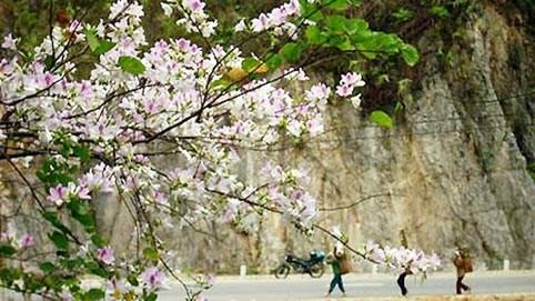Northwestern province prepares for flower festival hinh anh 1