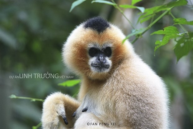 Book on primate species launched hinh anh 1