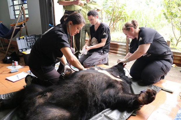 Six Asian bears rescued in Dak Lak province hinh anh 1