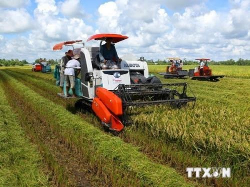 Can Tho, RoK association cooperate in rice production hinh anh 1