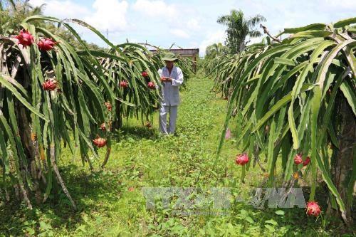 Seminar promotes GI development for Binh Thuan dragon fruit hinh anh 1