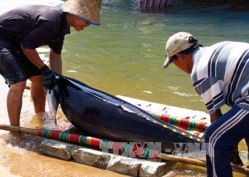 Khanh Hoa's fishermen trained to protect dolphins hinh anh 1