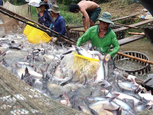 Tra fish exports estimated to increase 6.6 percent in 2016 hinh anh 1
