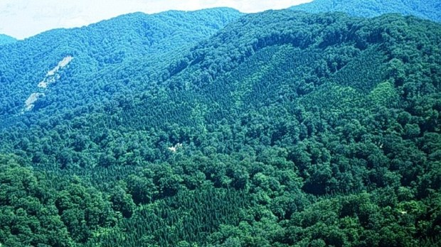 Forest coverage to rise to 47.25 percent in 2017 hinh anh 1