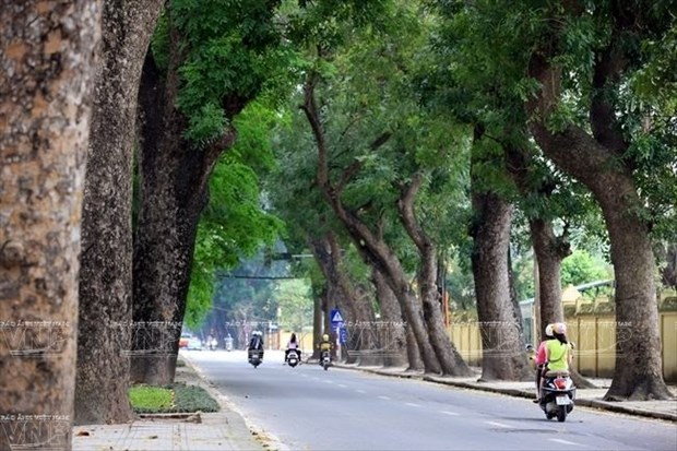 Singapore called to help Hanoi with trees management hinh anh 1