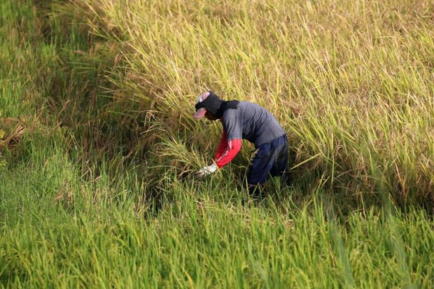 Philippines eyes faster farm output growth in 2017 hinh anh 1