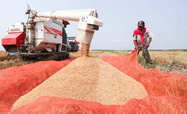 Laos to increase rice exports to China in 2017 hinh anh 1