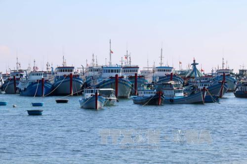 More storm shelter for fishing boats built in Ben Tre hinh anh 1