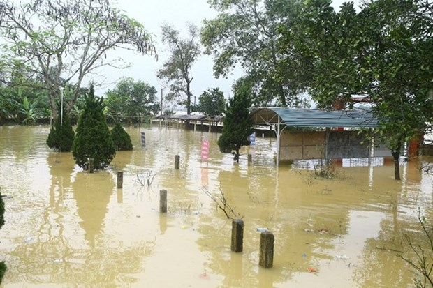 Government supports eight flood-hit localities hinh anh 1