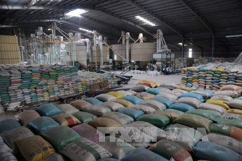 Vietnam to extend rice trade deal with Philippines hinh anh 1