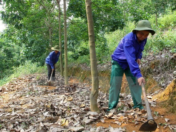 VRG plants 90,000 hectares of rubber in Cambodia so far hinh anh 1