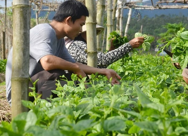 Vietnam, Israel develop supply chain of farm produce hinh anh 1