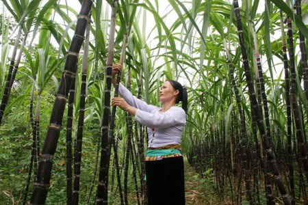 Sustained support needed to sustain poverty reduction hinh anh 1