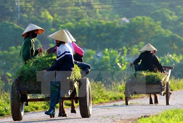 Central Highlands: 100 communes recognised as new-style rural areas hinh anh 1
