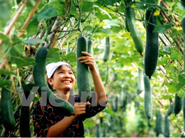 Improved quality boosts export of fruit, vegetables hinh anh 1