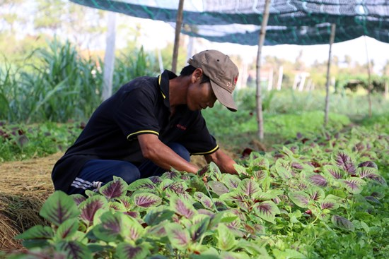 Ben Tre targets 2 percent growth in agro-forestry-fishery in 2017 hinh anh 1