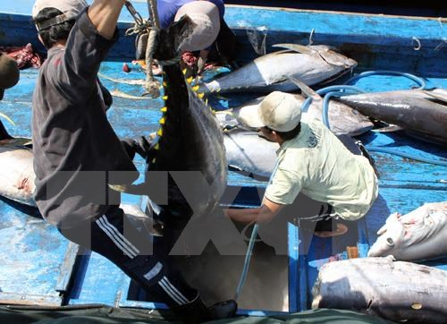 US increases tuna imports from Vietnam hinh anh 1