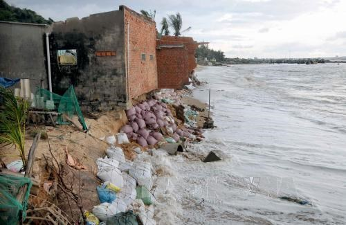 Binh Thuan province struggles to tackle coastal erosions hinh anh 1