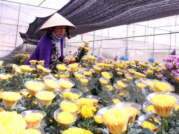 Da Lat to open flower trading centre hinh anh 1