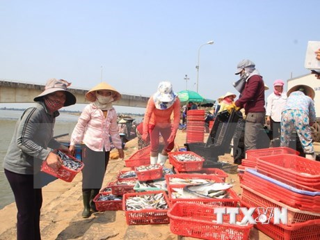 Deputy PM urges completing compensation for fishermen hinh anh 1