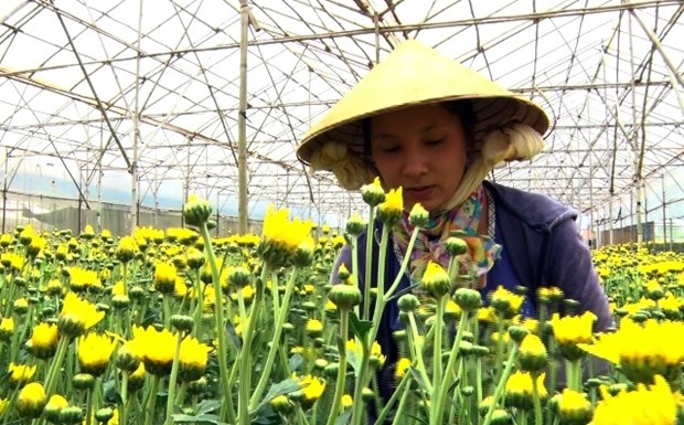 Flower centres to be set up in HCM City, Da Lat hinh anh 1