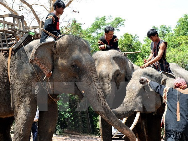 Elephant conservation comes into spotlight hinh anh 1