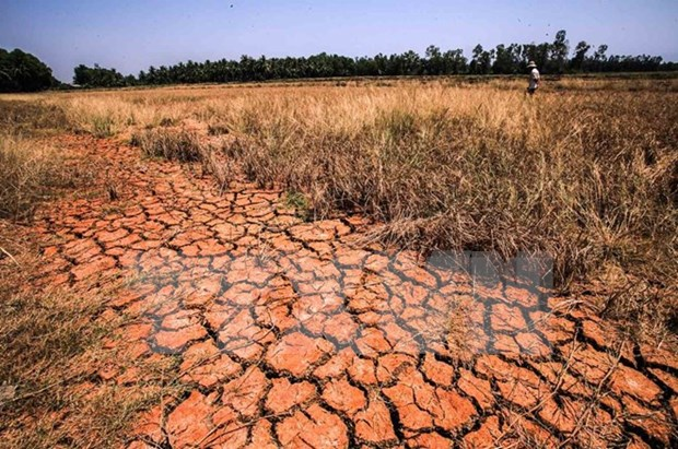 Mekong Delta seeks to conserve water hinh anh 1