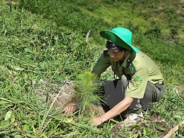 Central Highlands provinces fail to meet forest replantation target hinh anh 1