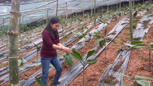 Herbal plant preservation yields large profit hinh anh 1