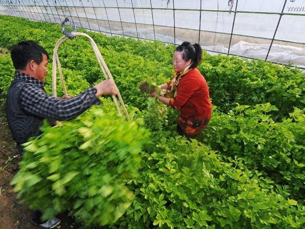 Poor access to loans hinders production development hinh anh 1