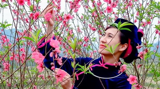 Peach flower festival kicks off in Lang Son hinh anh 1