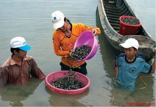 Ba Ria-Vung Tau: Oyster farming brings stable incomes to locals hinh anh 1
