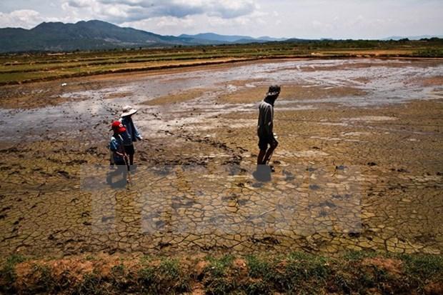 Vietnam at risk of sea desertification hinh anh 1