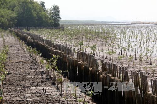 Sea dyke erosion worsens in Kien Giang hinh anh 1