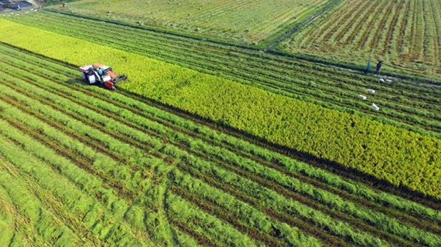 Mekong Delta urges more high-tech farming investment hinh anh 1